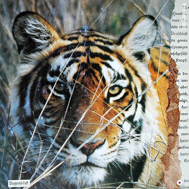 Miss Herzfrischs Collagen 15fuenfzehn Tigerliebe Augenblick