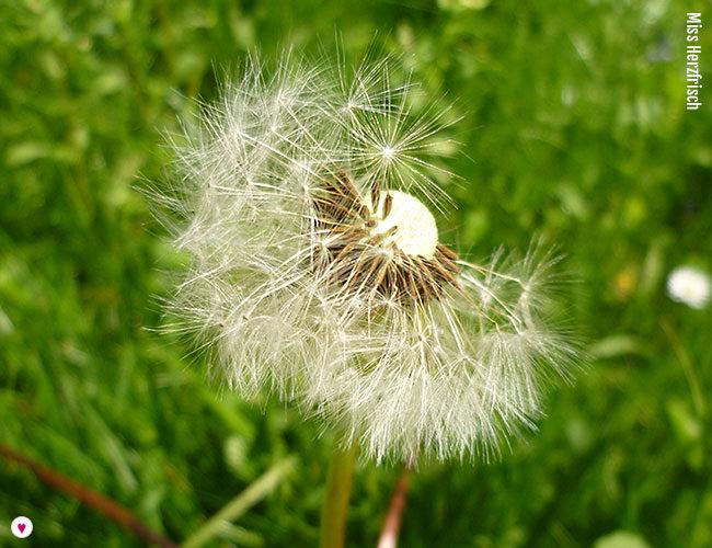 Das kleine Löwenzahn Buch - Frühlings-Mail-Art 2017 pusteblume